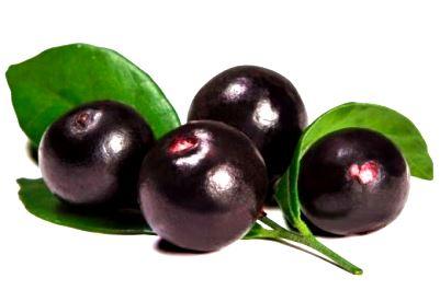 Exotické ovocie I.